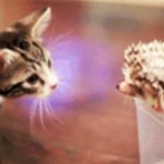 hedgehog-kitten-meeting-gifs