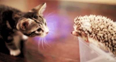 hedgehog-kitten-meeting-gifs