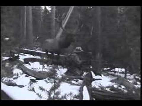 The Elk That Got Away