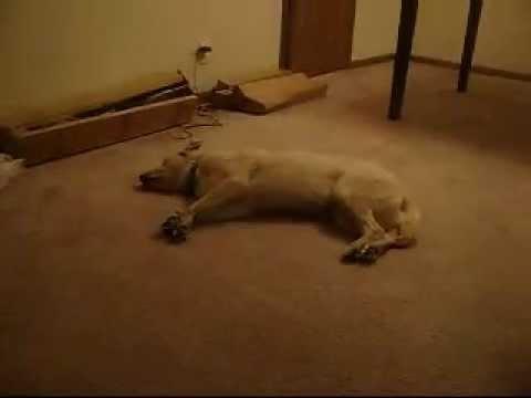 The Sleep Walking Dog