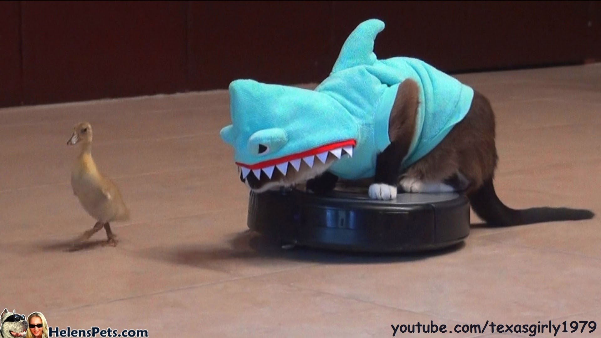 Cat In A Shark Costume On A Roomba Chases A Duck