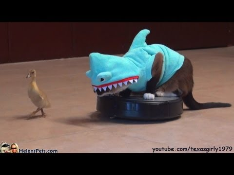 Video thumbnail for youtube video Cat In A Shark Costume On A Roomba Chases A Duck