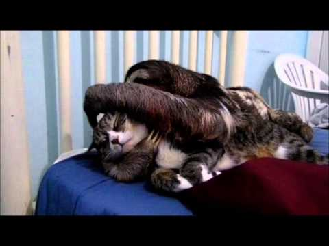 Video thumbnail for youtube video Cat & Sloth Snuggle It Out