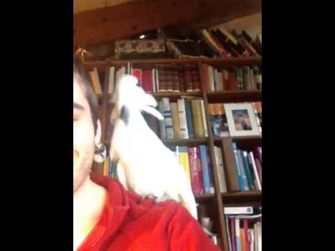 Cockatoo Jams Out To Daft Punk