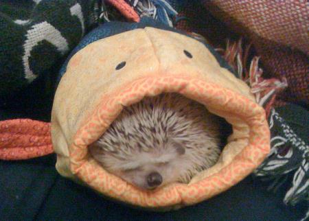 The 25 Cutest Hedgehog Gifs Ever