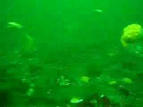 How Scallops Swim