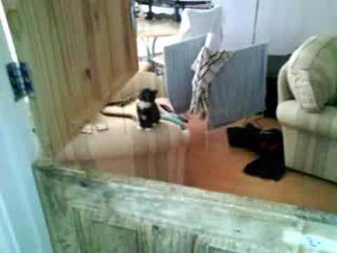 Kitten Jump Fail