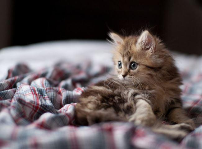 most-photogenic-cat-1
