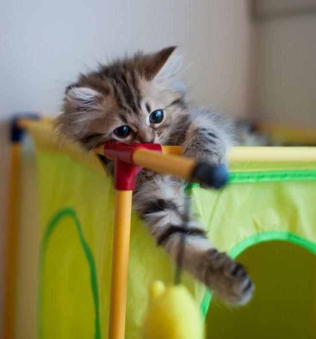 most-photogenic-cat-10