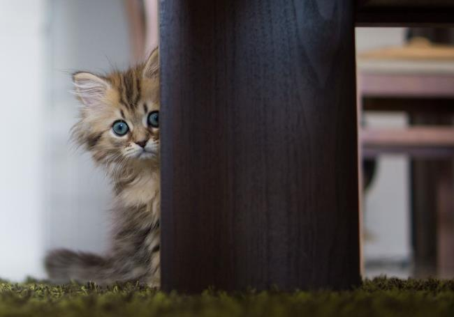 most-photogenic-cat-13