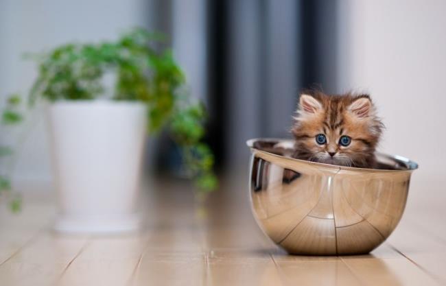 most-photogenic-cat-14