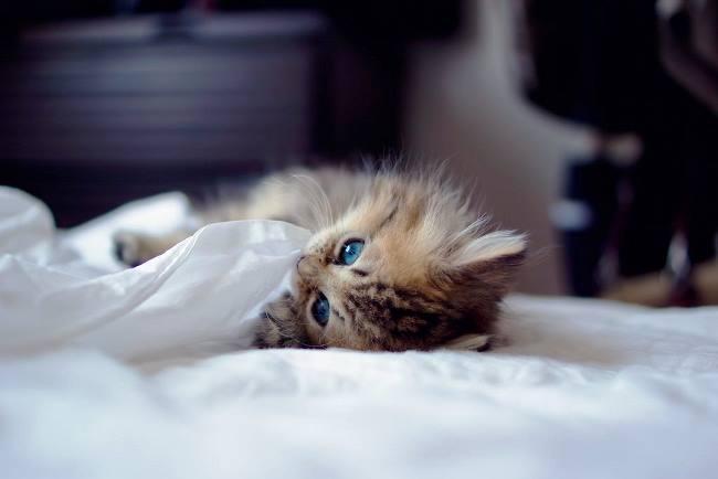 most-photogenic-cat-15