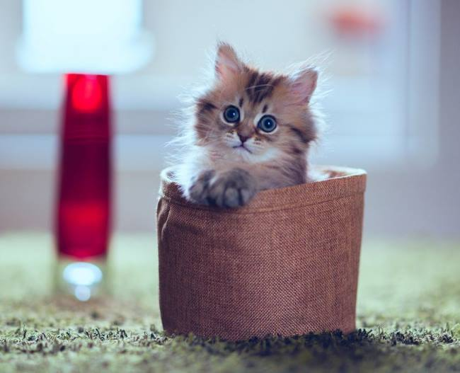 most-photogenic-cat-16