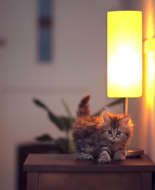 most-photogenic-cat-17