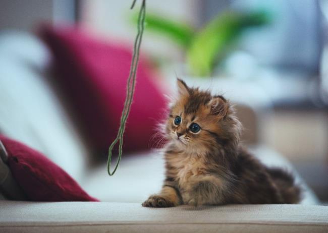 most-photogenic-cat-19
