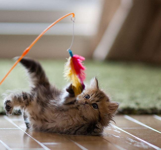 most-photogenic-cat-2