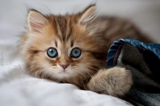 most-photogenic-cat-3