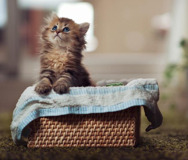most-photogenic-cat-4