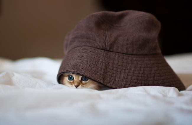 most-photogenic-cat-5