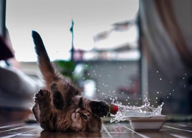 most-photogenic-cat-6