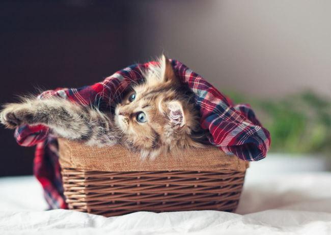 most-photogenic-cat-9