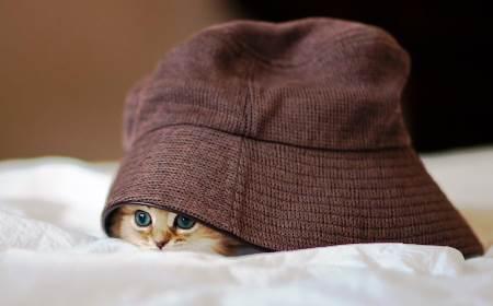 photogenic-cat