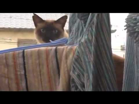 Video thumbnail for youtube video There Goes The Cat