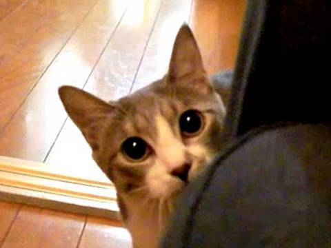 The 55 Best Cat GIFs Ever