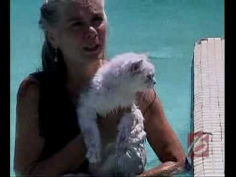 Cats Learn To Swim