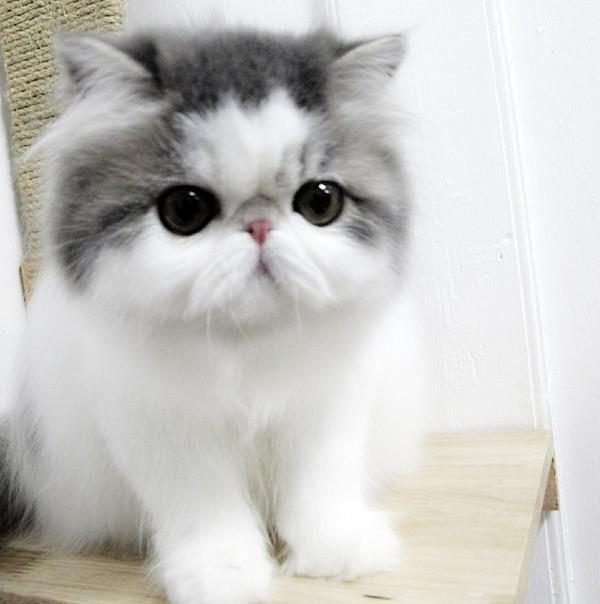 Hope The Cute Cat