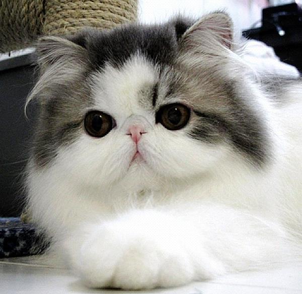cute-cats-hope-9
