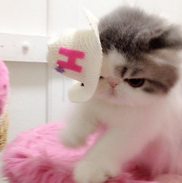 Cute Cats Hope