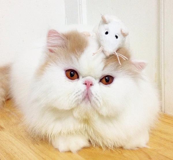 Iliad The Cute Cat
