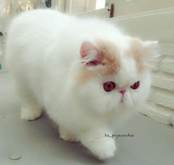 Cute Cats – Iliad