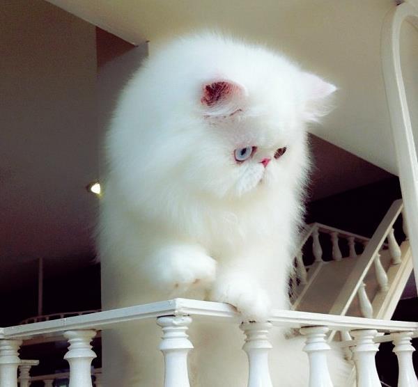 Cute Cats Titan
