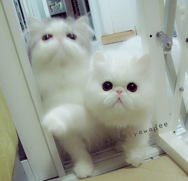 Cute Cats Picture