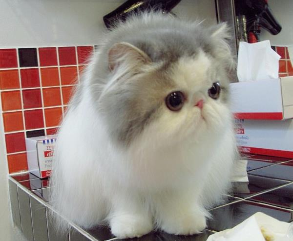 cute-kitten-hope