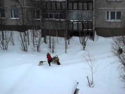 Guy Saves Girl From Pack Of Dogs
