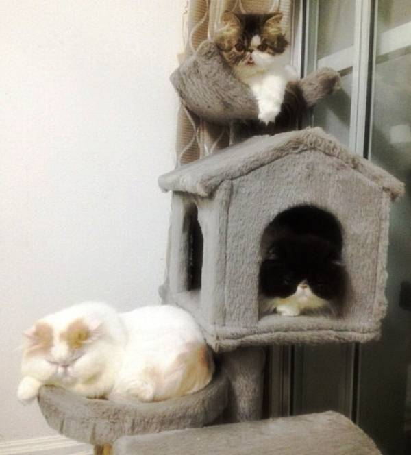 Cats Of The Homer Cattery