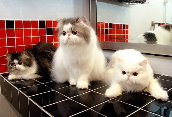 Cute Cats Of Instagram