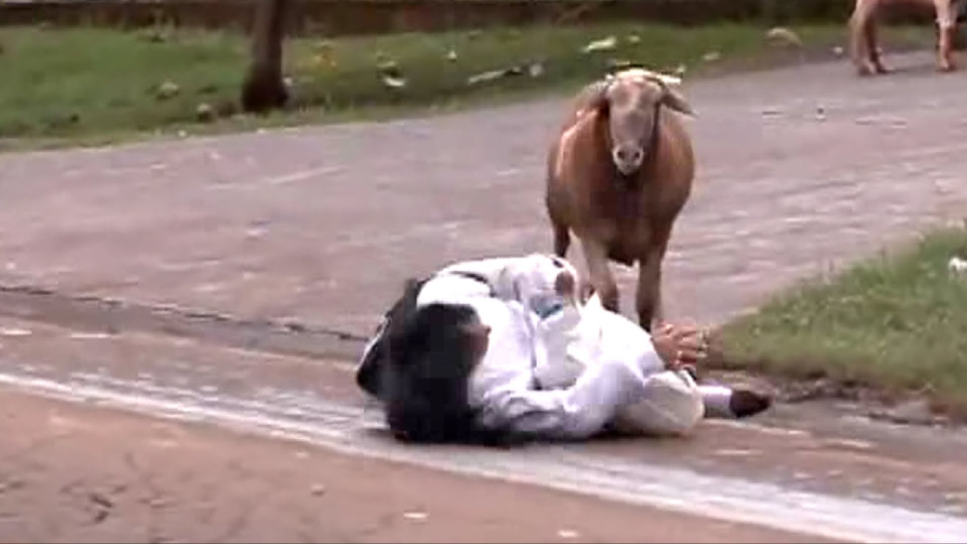 Angry Goat Terrorizes Town