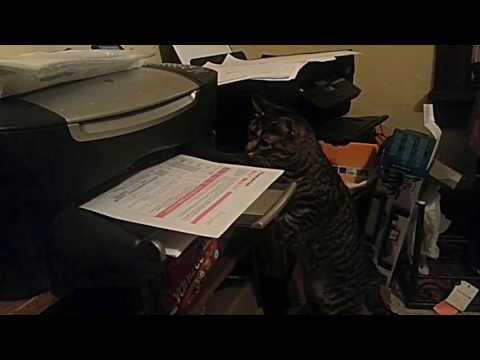 Video thumbnail for youtube video Cat Versus Printer