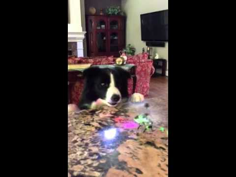 Video thumbnail for youtube video Dog Messes With The Wrong Toy Helicopter