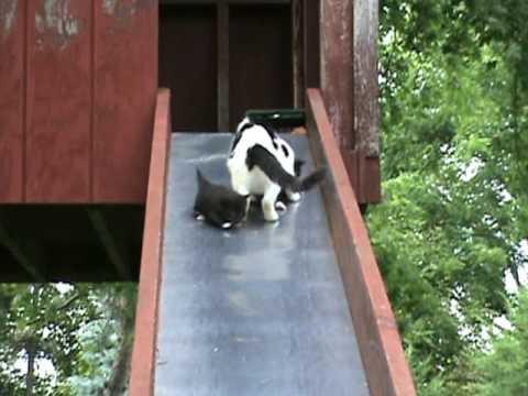 Video thumbnail for youtube video Kittens On A Slide