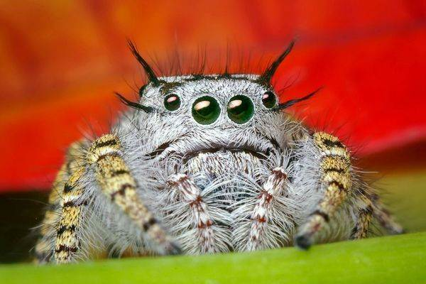Cutest Pictures Spider