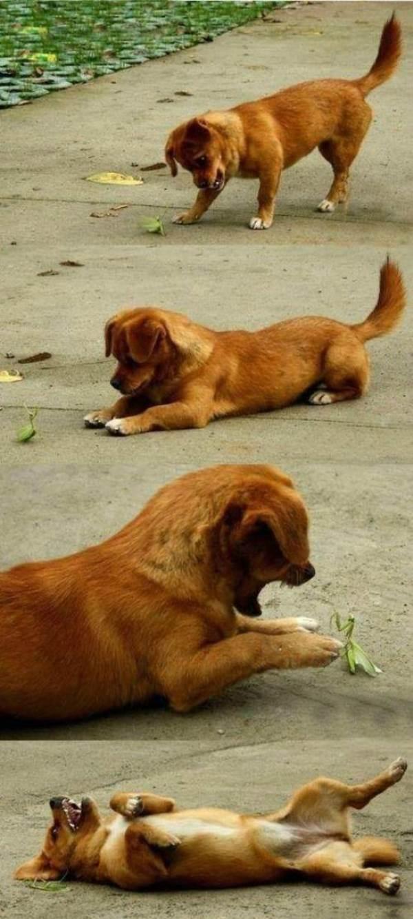 Dog And Praying Mantis