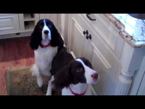 Video thumbnail for youtube video The Happiest Dogs Ever
