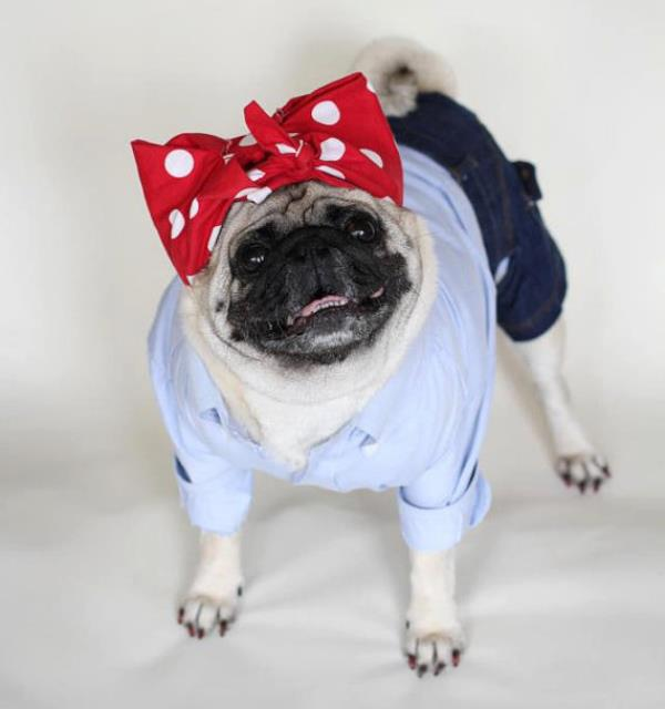 Lucille Ball Pug Costume