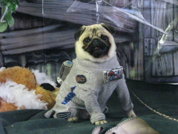 Pug Costumes Astronaut