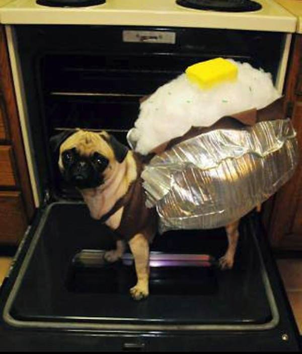 Pug Costumes Baked Potato